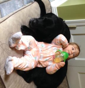 Doc son and baby- precious- Endless Mt. Labradors