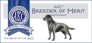 AKC breeder of Merit-Endless Mt. Labradors