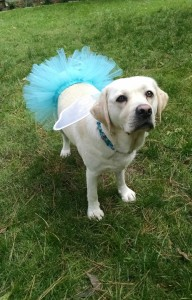 Libbie wearing her tutu for halloween