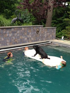 Margaux in the pool- Endless Mt. Labradors