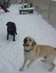 eleanor and vinny in the snow