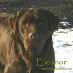 Eleanor - Endless Mt. Labradors