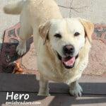 Hero name 6