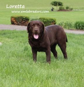 Loretta- Endless Mt. Labradors