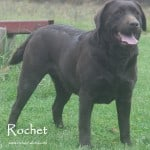 Rochet- Endless Mt. Labradors