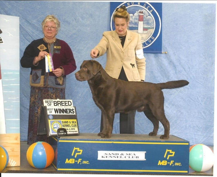 """Sterling's sire, GCh BISS Ch Willcare To Fly Under the Radar RN WC CGC, """"Walter"""""""