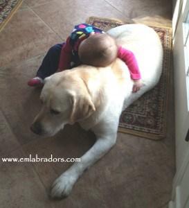 Amy and Eva- Endless Mountain Labradors
