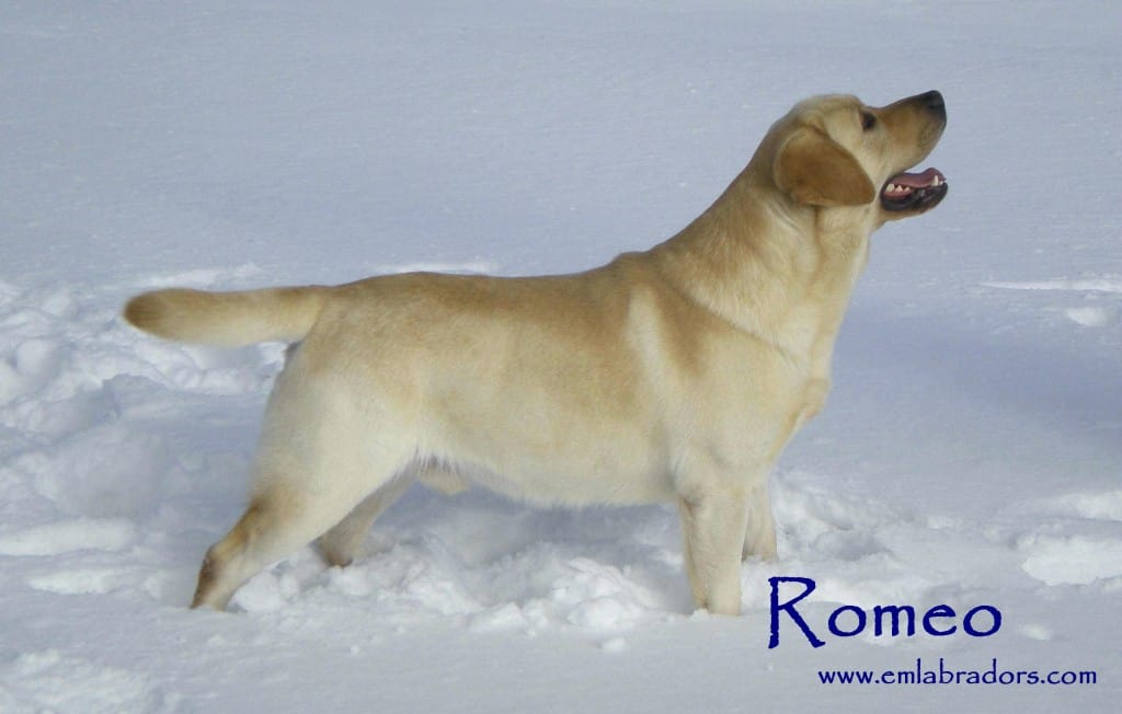 my dog romeo Dog boarding welcome about contact pricing fun with friends reviews foster guests romeo - my angel welcome to romeo's doghouse a safe place for your best friend to stay when you need to be away  pricing fun with friends reviews foster guests romeo - my angel.