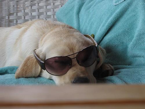 lola in sunglasses