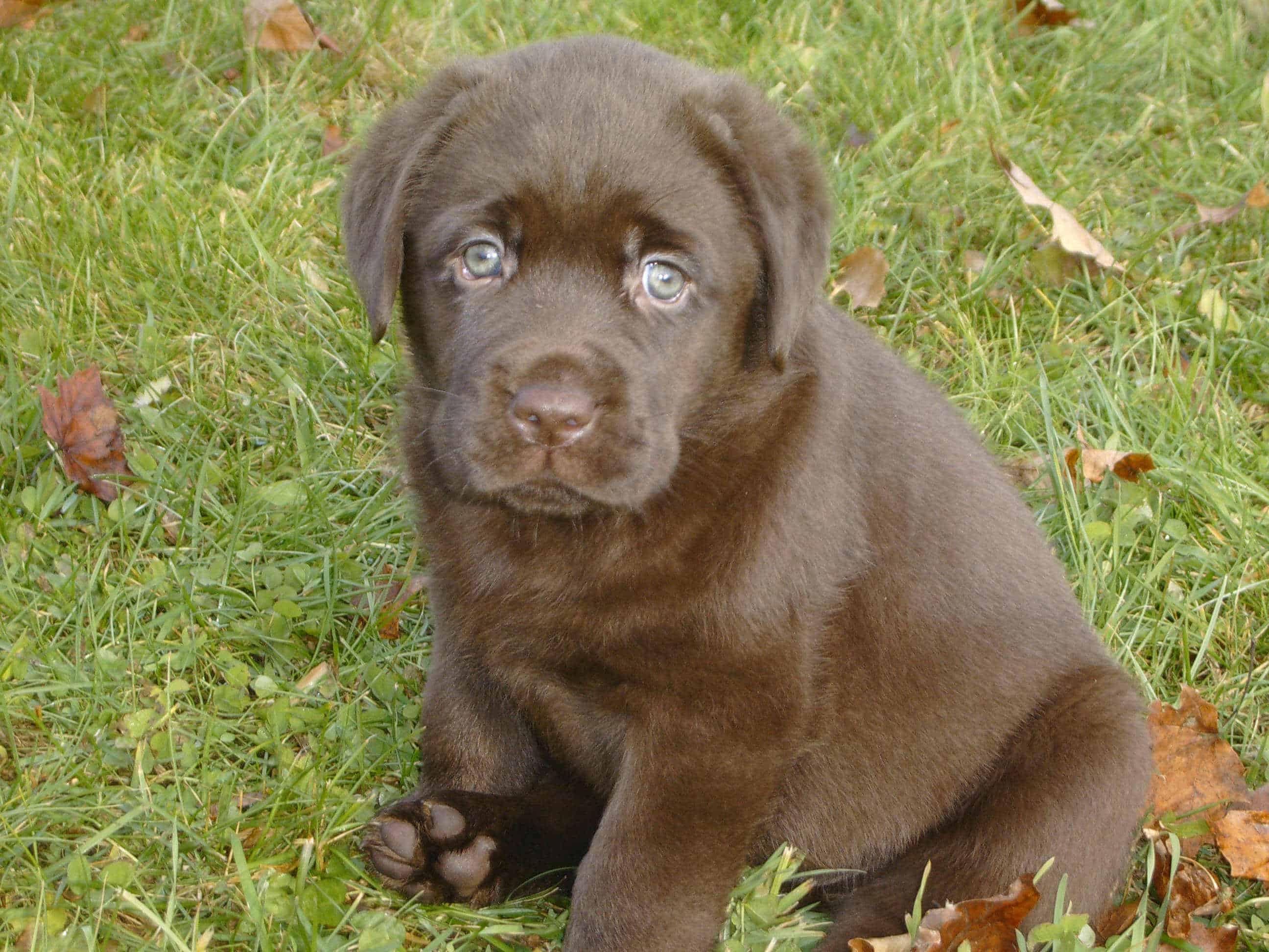 What's in a Name? – Endless Mountain Labradors