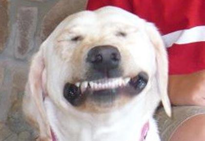 doggy-dental-hygiene