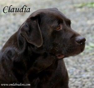 Claudia- Endless Mt. Labradors