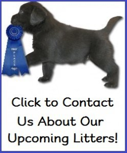 Contact us- Endless Mt. Labradors