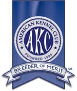 AKC breeder of merit- Endless Mt. Labradors