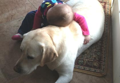 child in love with labradors