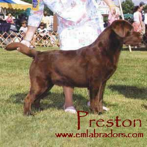 Preston- Endless Mt. Labradors