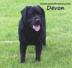 Devon name3