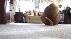 Dog dragging his butt
