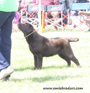 Sterling at Potomac- Endless Mountain Labradors