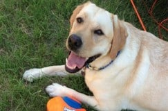 dog-saved-life