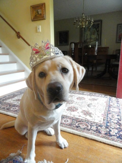 Libbie (Paige x Hero) on her first birthday...