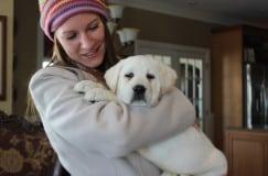 Chubby white labrador puppy- Endless Mt. Labradors