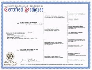 Brody's certified pedigree