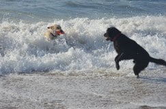 Keb and Seeger playing in the ocean together