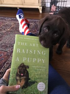 art-of-raising-a-puppy