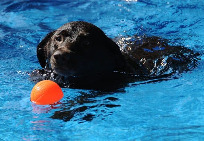 7552425 - dog swimming on a hot summer day.
