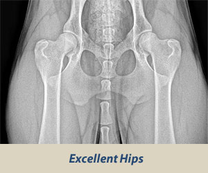 Large Dog Hip Supplements