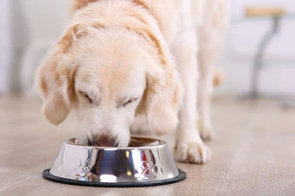 49174004 - nice taste.  close up of beautiful dog eating from the bowl