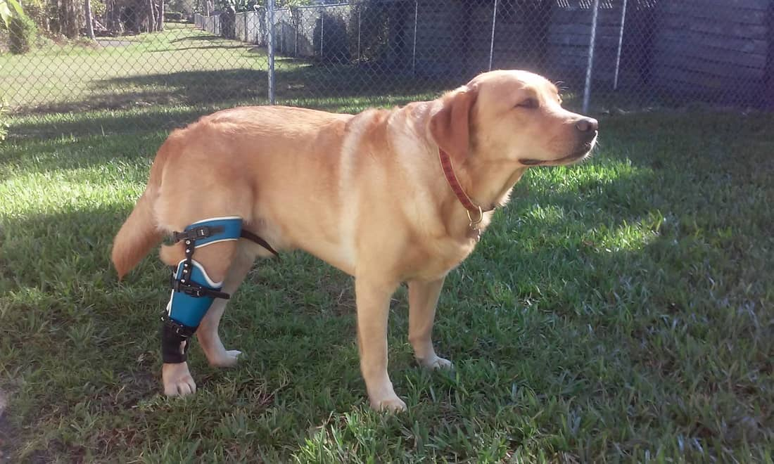 best knee brace for dog acl tear