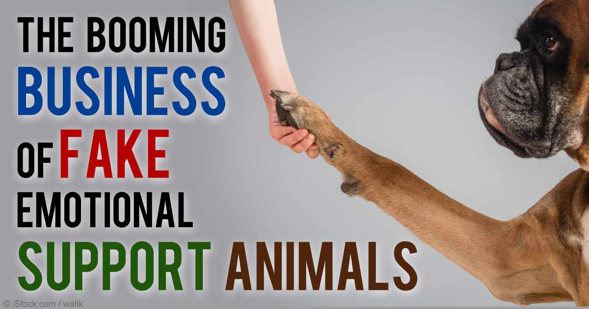 Esa Emotional Support Animals The New Debate On The Move Or Out