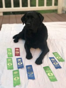 Testimonials – Endless Mountain Labradors